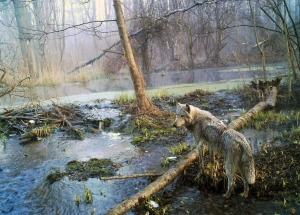 Wolf in Pripyat