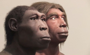 Neanderthals face