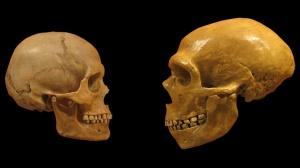 Homo Sapien & Homo neanderthalensis